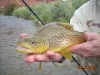 Freemont River Brown